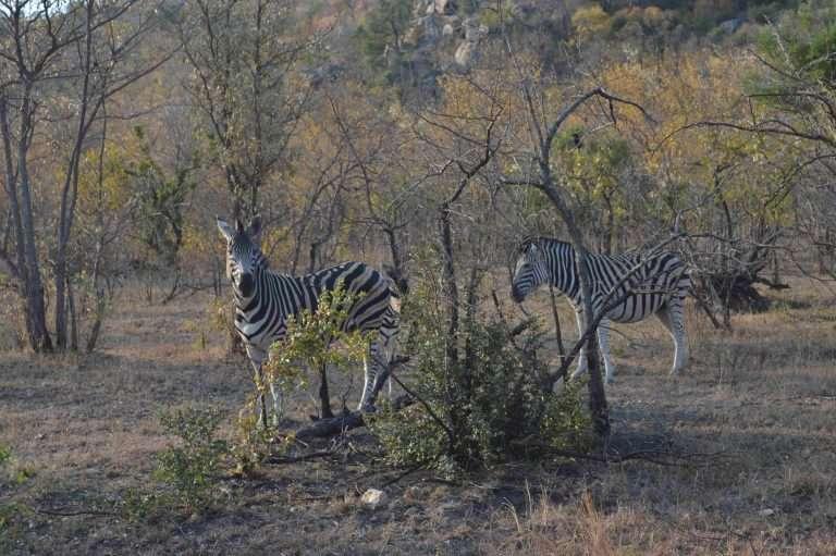 Safari Low Cost: Parque Kruger