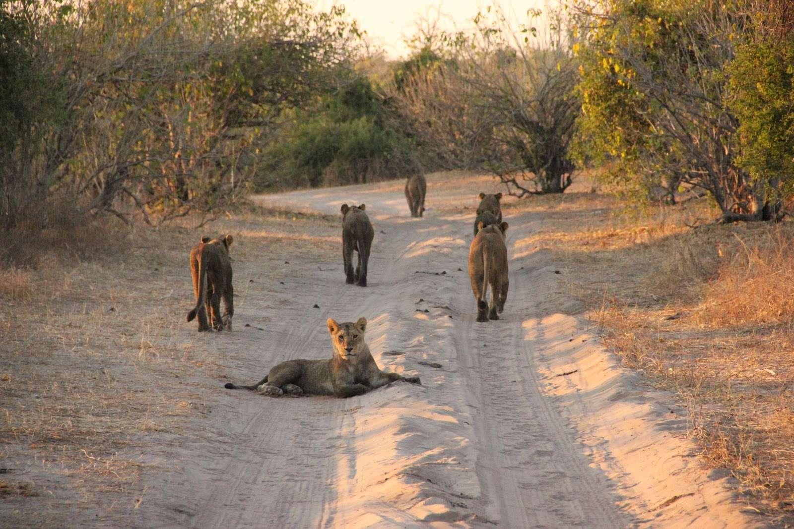 10 lugares que debes visitar en tu viaje a Namibia
