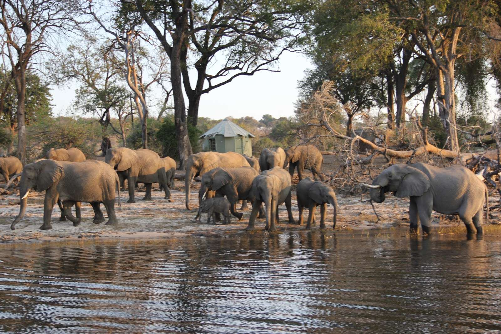 Cuatro reservas para hacer un safari y no morir en el intento
