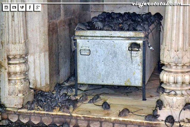 Karni Mata, el increíble templo de las ratas de Bikaner
