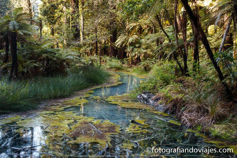 Qué ver en Rotorua: volcanes, cultura maorí y secuoyas