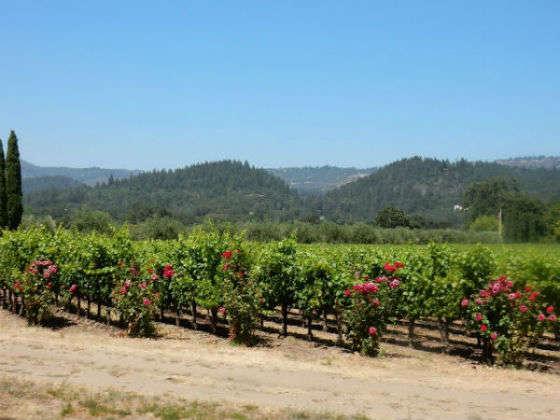 Silverado Trail, la ruta del vino más bonita del Napa Valley