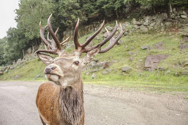 Visitar Omega Parc y dormir entre ciervos, lobos y osos