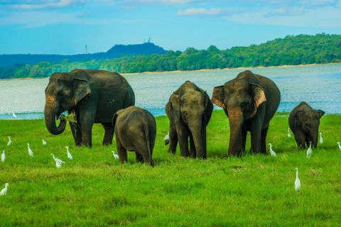 Día 5: Polonnaruwa y safari en Minneriya