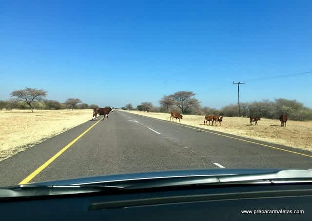 Cruzar Botsuana en coche por el desierto de Kalahari