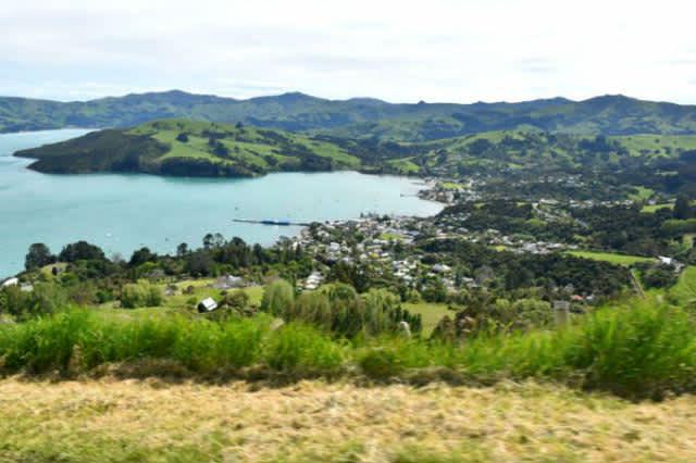 NUEVA ZELANDA: AKAROA (POHATU PENGUINS)