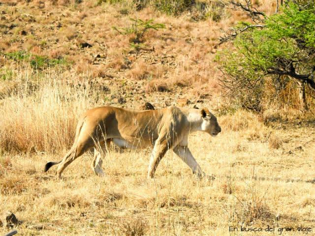 Safari en Pilanesberg (Sudáfrica)