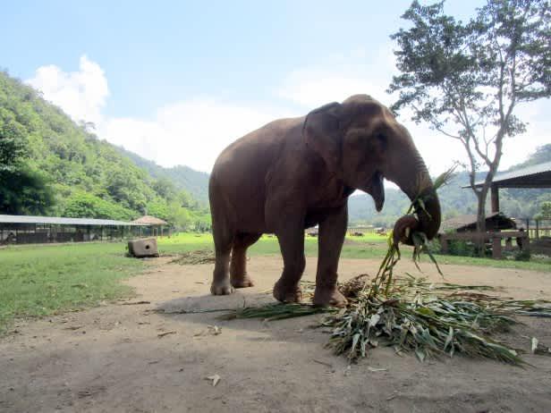 Los últimos Jedis de Chiang Mai: un día en el Elephant Nature Park.