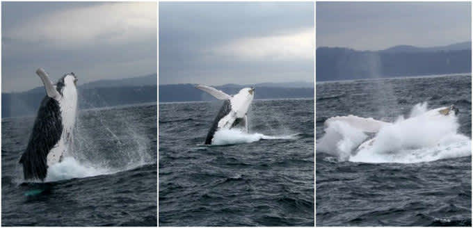 Eden (Australia) – viendo ballenas