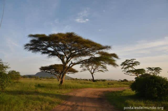 Visita a Tanzania – Serengeti (I)