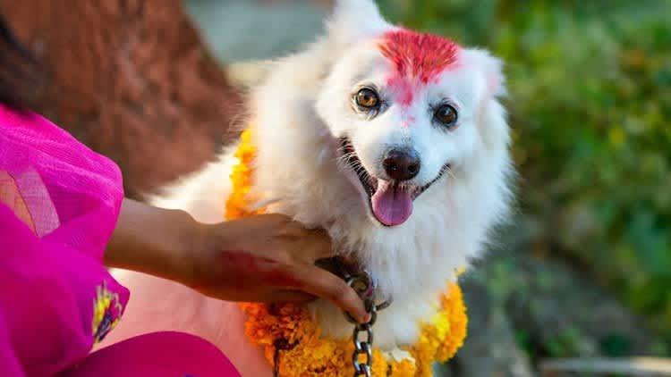 Tihar, la festividad nepalí que homenajea a cuervos, perros, vacas y bueyes