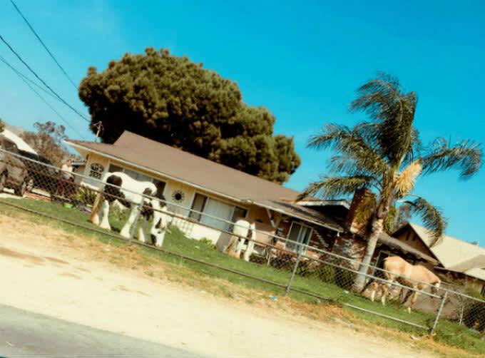 Caballo town – Corona (California)
