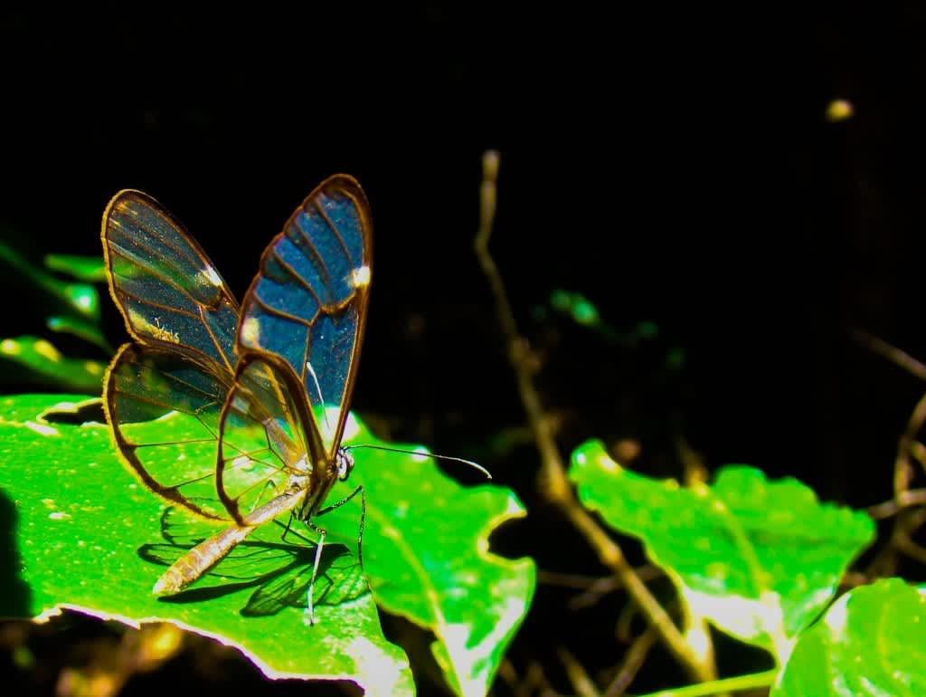 Qué ver en Costa Rica, naturaleza en estado puro
