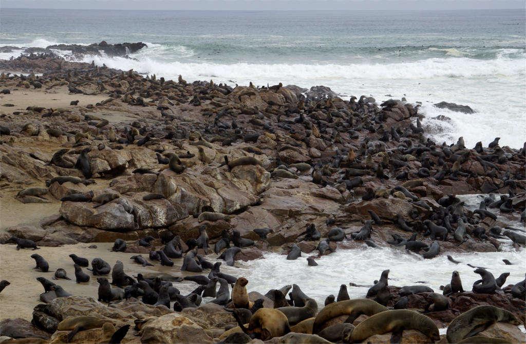 Cape Cross y sus cientos de leones marinos.