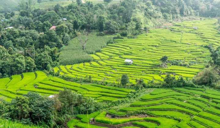 La adrenalina de viajar sin planes, perdido en al jungla (Chiang Mai)