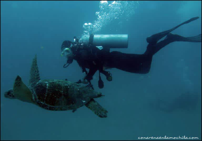 Galápagos y su mundo submarino: Buceo en los mejores puntos de las Islas Encantadas
