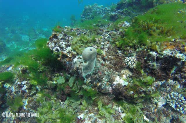 Buceo en la barrera de coral de Madagascar