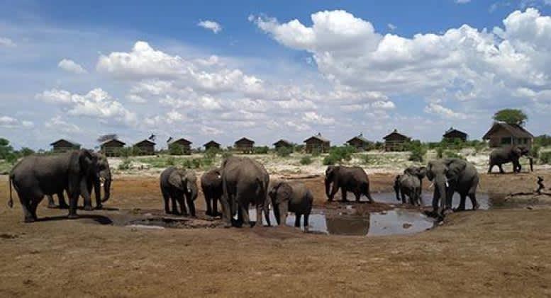 Elefantes por tierra y por aire en Botsuana