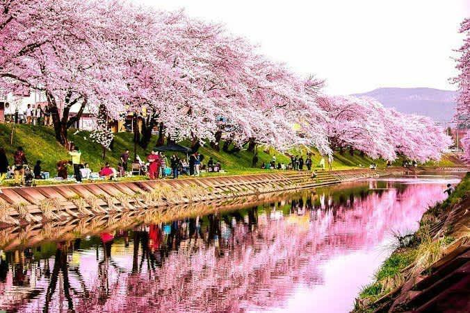 Cuándo viajar a Japón. Clima, eventos y precios
