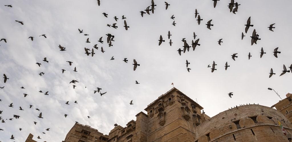 cosas-para-hacer-en-jaisalmer-rajasthan-india
