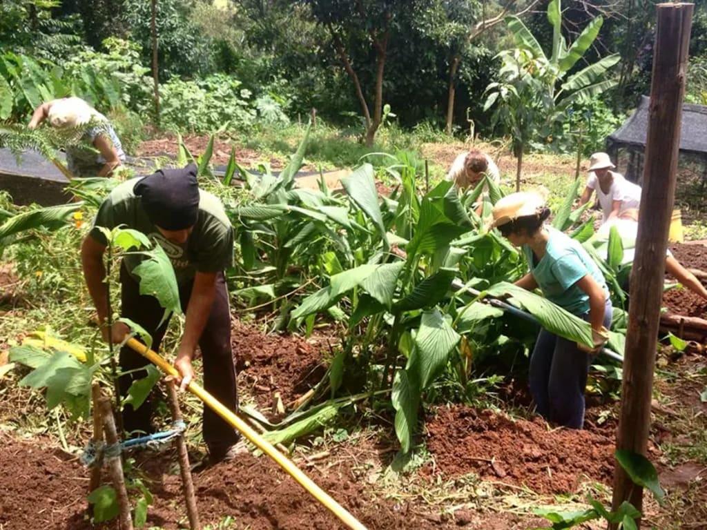 Voluntário em experiência ecológica em Minas Gerais