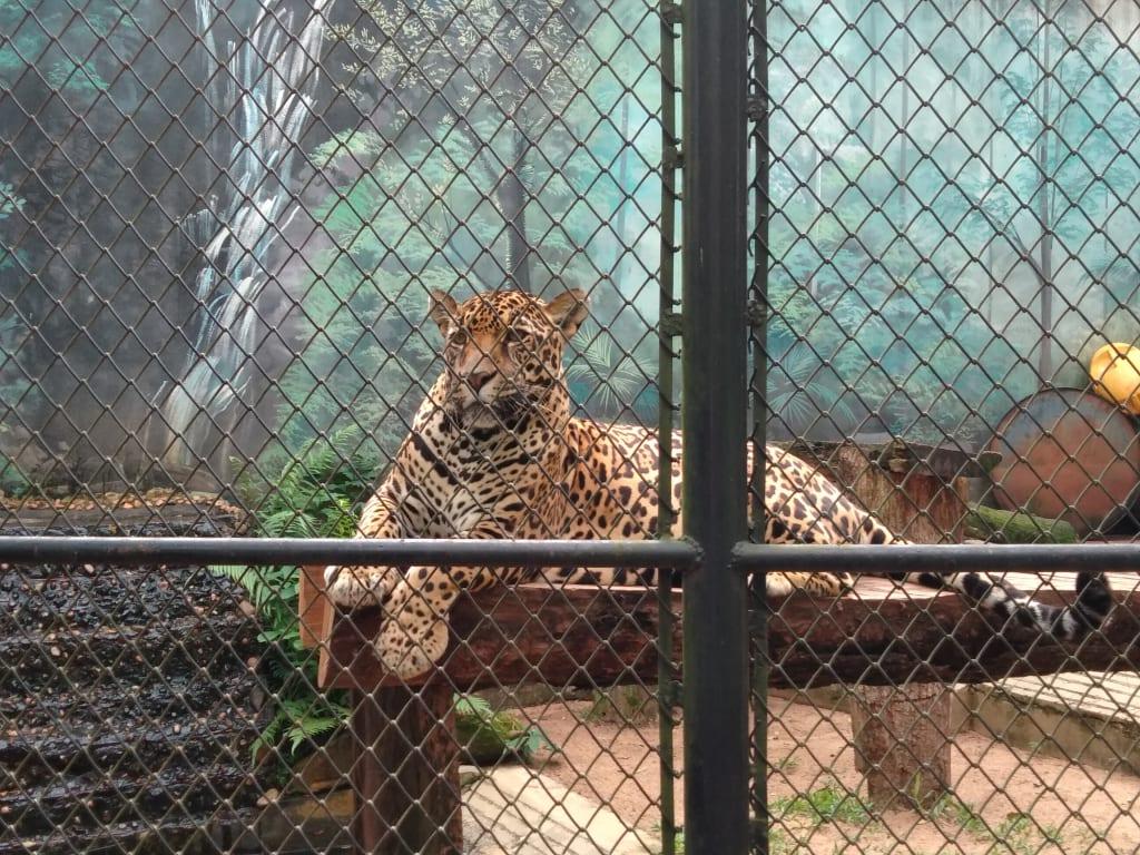 Atrações que envolvem maus tratos contra animais