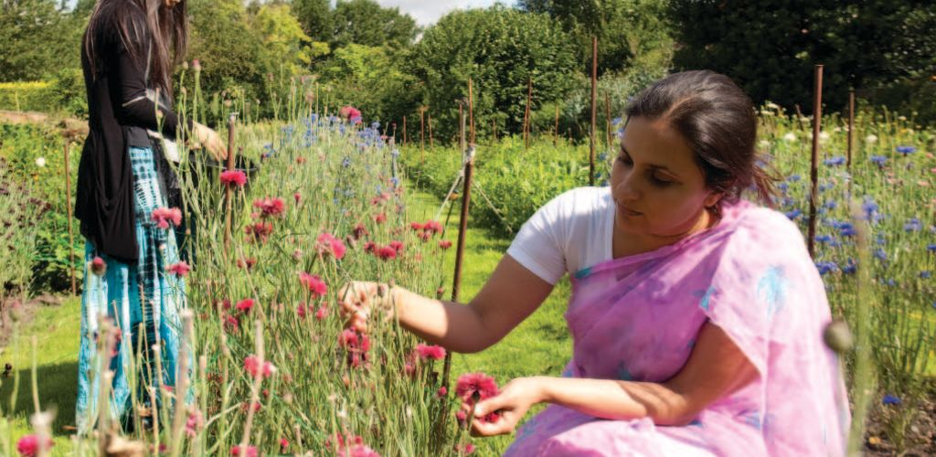 voluntarias en granja organica en Belgica