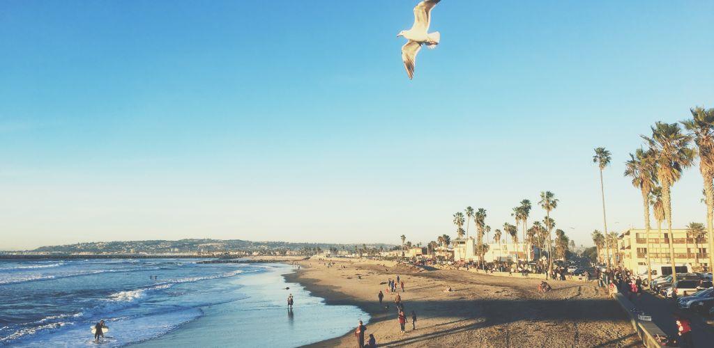 Praia em San Diego com céu azul e uma andorina voando