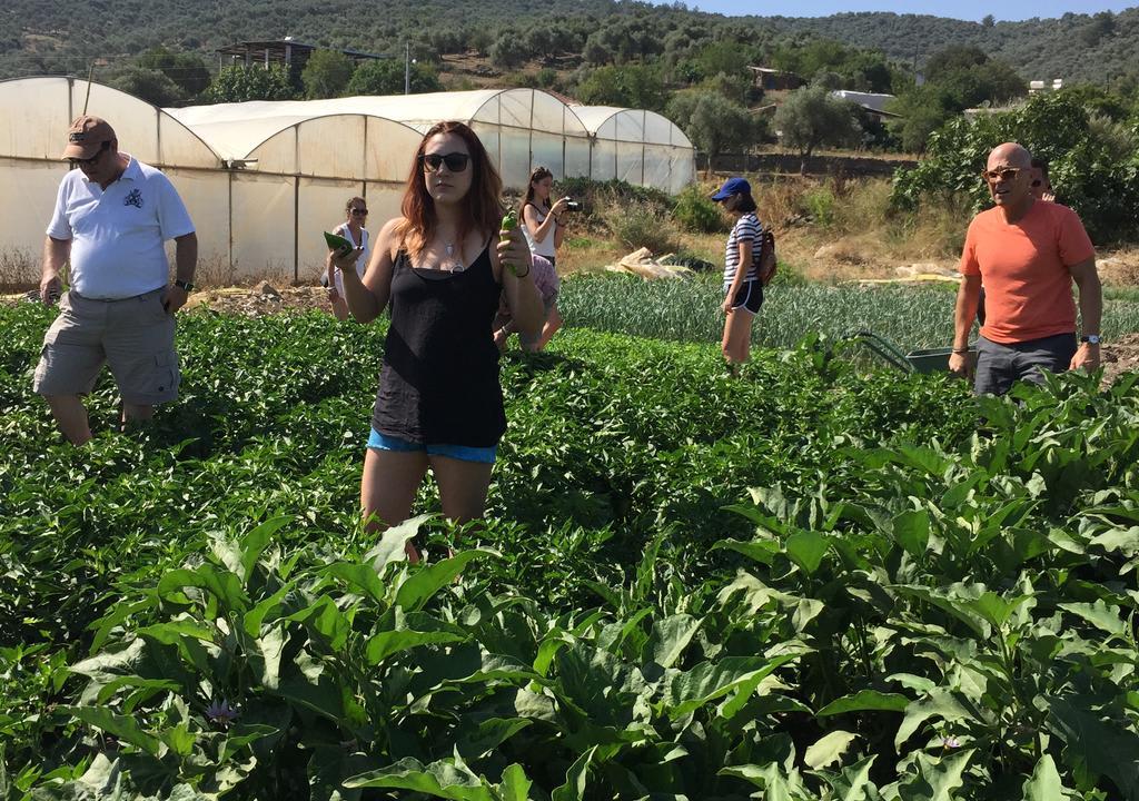 Viajantes em fazenda orgânica