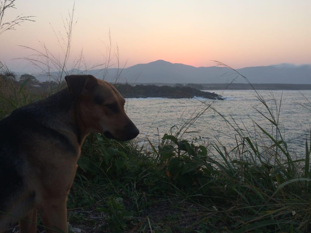 cachorro vendo o mar no por do sol
