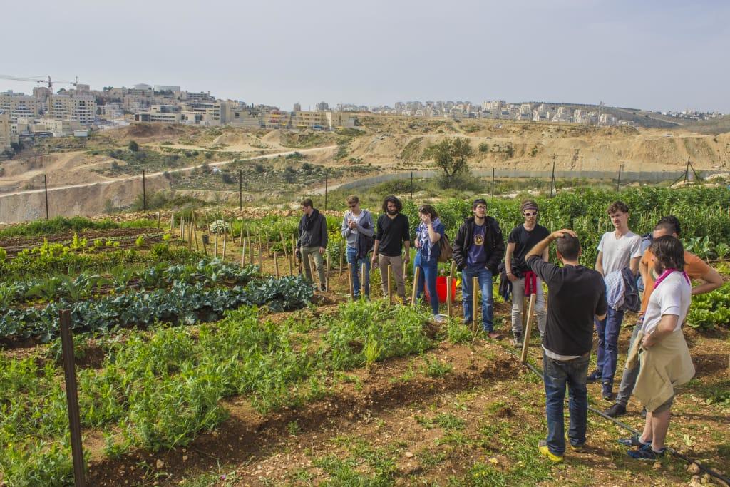 fazenda orgânica palestina