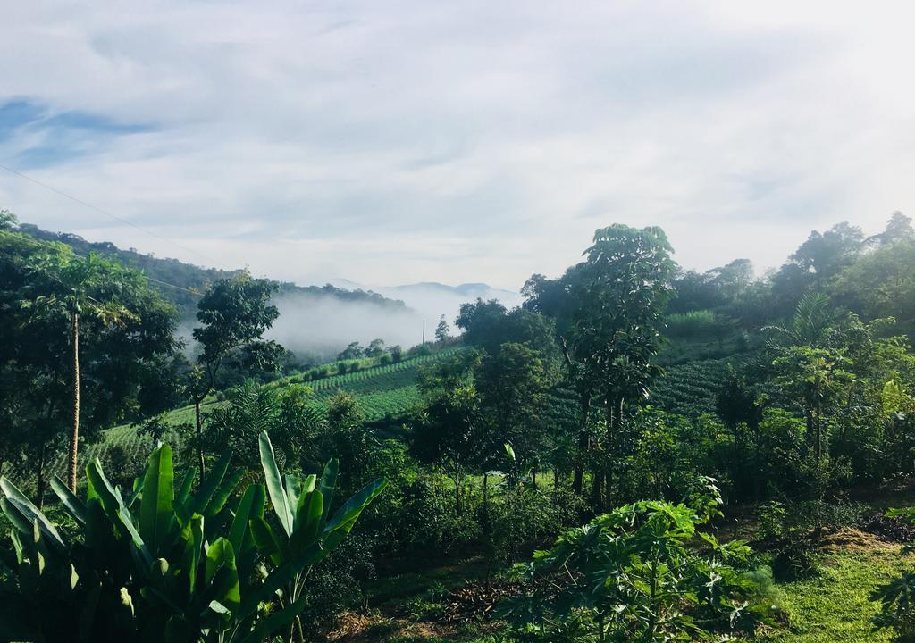 Voluntariado ambiental em Paraty