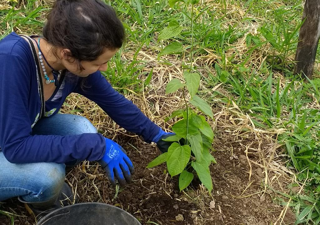 volunteer working in organic farm in Colombia