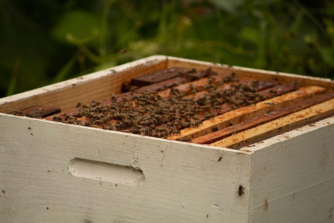 Volunteering as a beekeeper