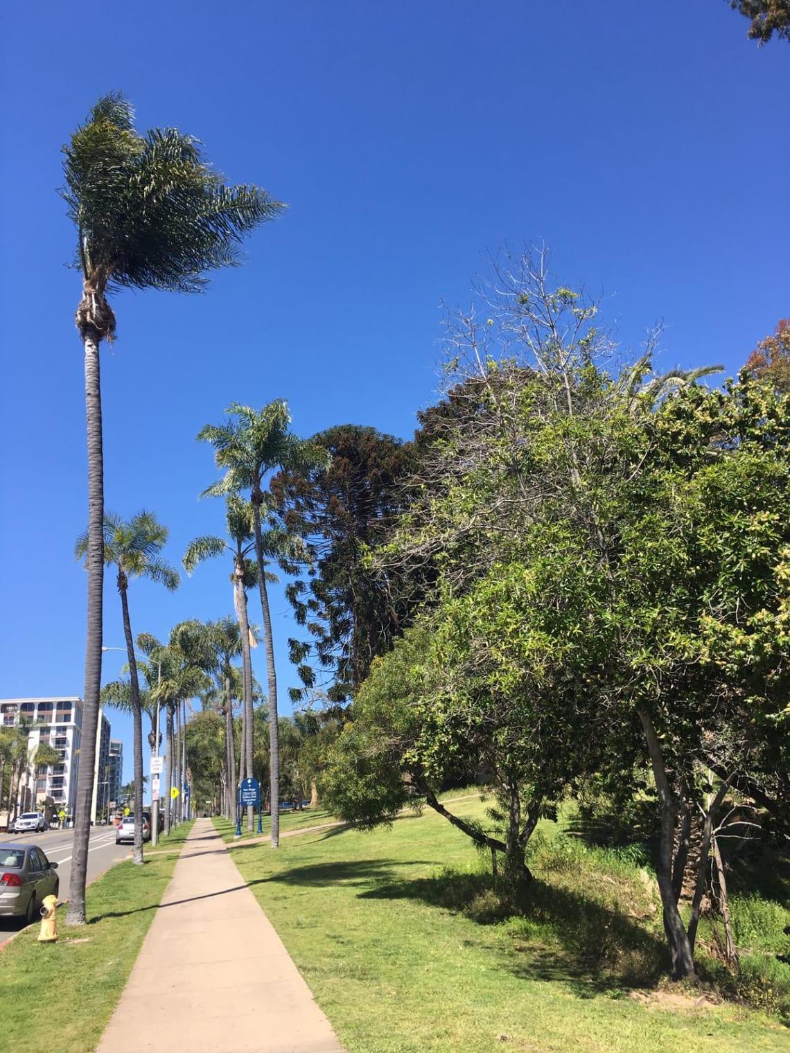 Lugares imperdibles que visitar en San Diego, California - Worldpackers - balboa park en san diego