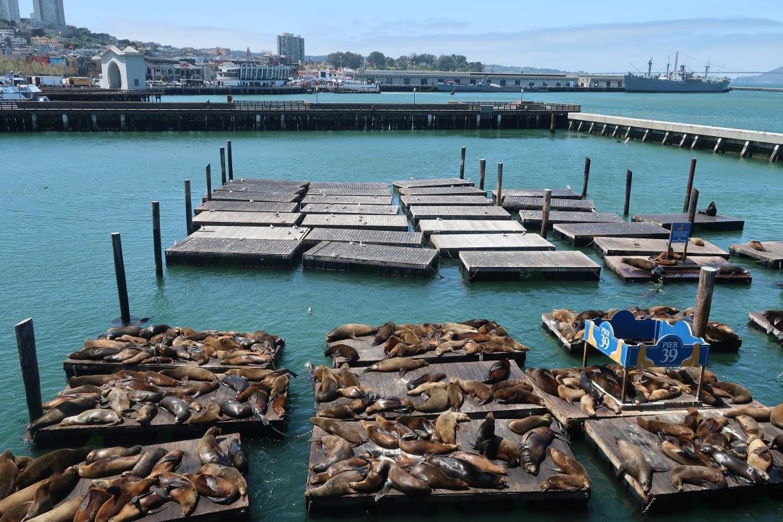 Dicas de São Francisco: Pier 39