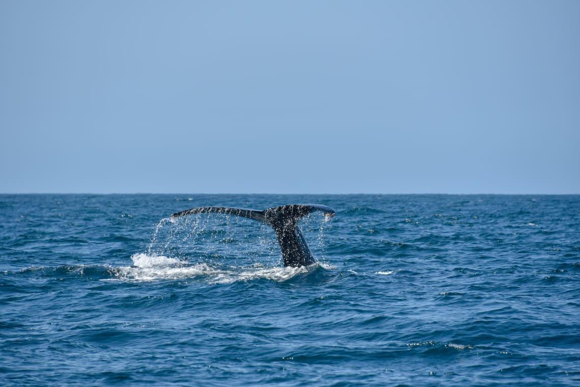 Los Cabos é ideal para quem quer ter contato com a vida marinha