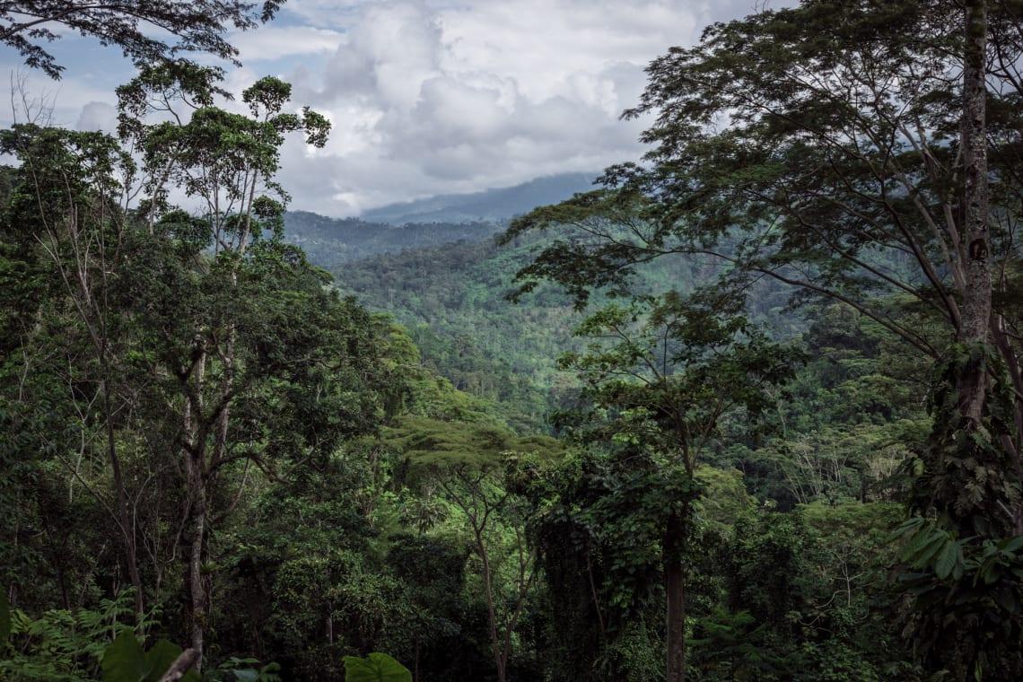 Seis meses haciendo voluntariados en Colombia - Worldpackers