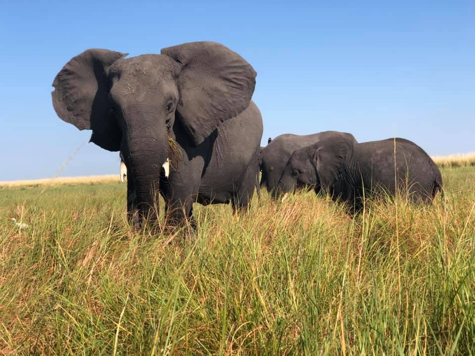 vida selvagem na africa austral