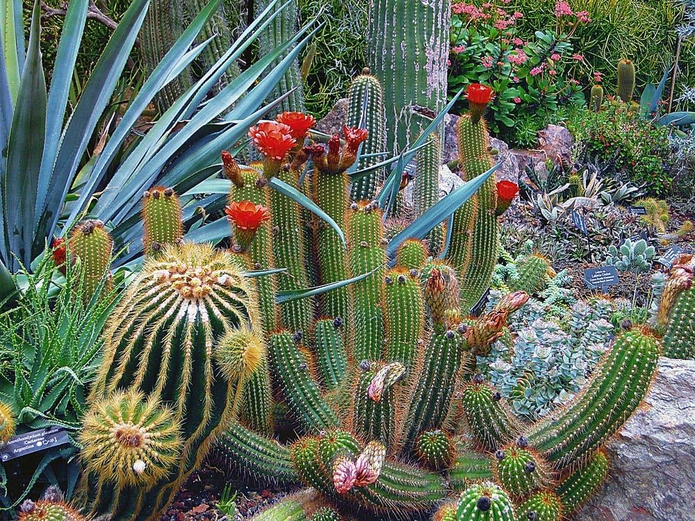 Mega guía para viajar a Singapur - Worldpackers- jardín botánico de Singapur