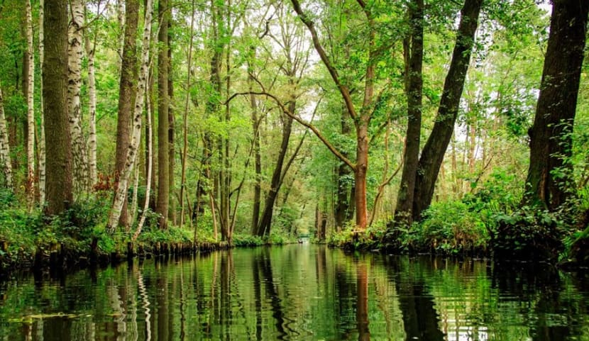 Things to do in Berlin: Spreewald Forest