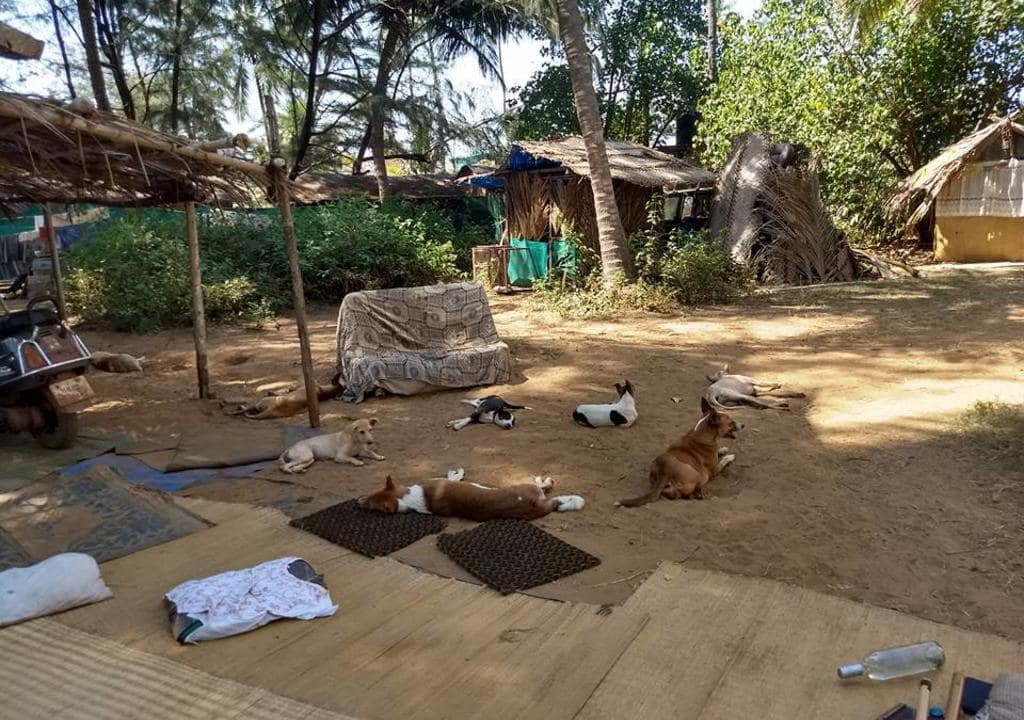 Volunteer with animals in India