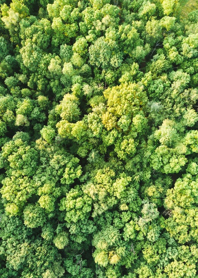 Cómo apoyar a la Selva Amazónica con un voluntariado - Worldpackers - vista aerea arboles del amazonas
