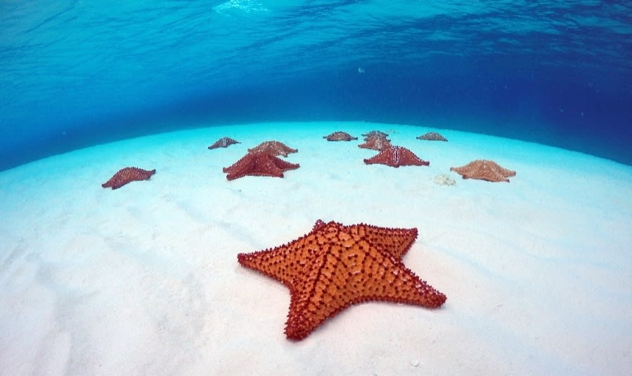 12 lugares que ver en Cancún y Riviera maya (sin necesidad de tener un auto) - Worldpackers - cozumel en cancun