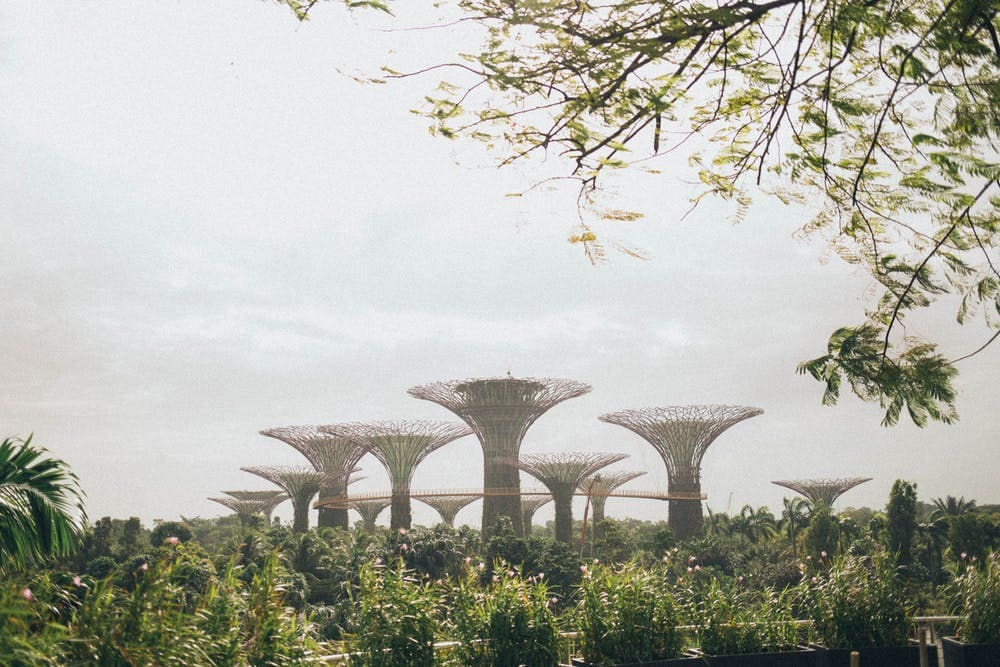 Mega guía para viajar a Singapur - Worldpackers- gardens by the bay singapur