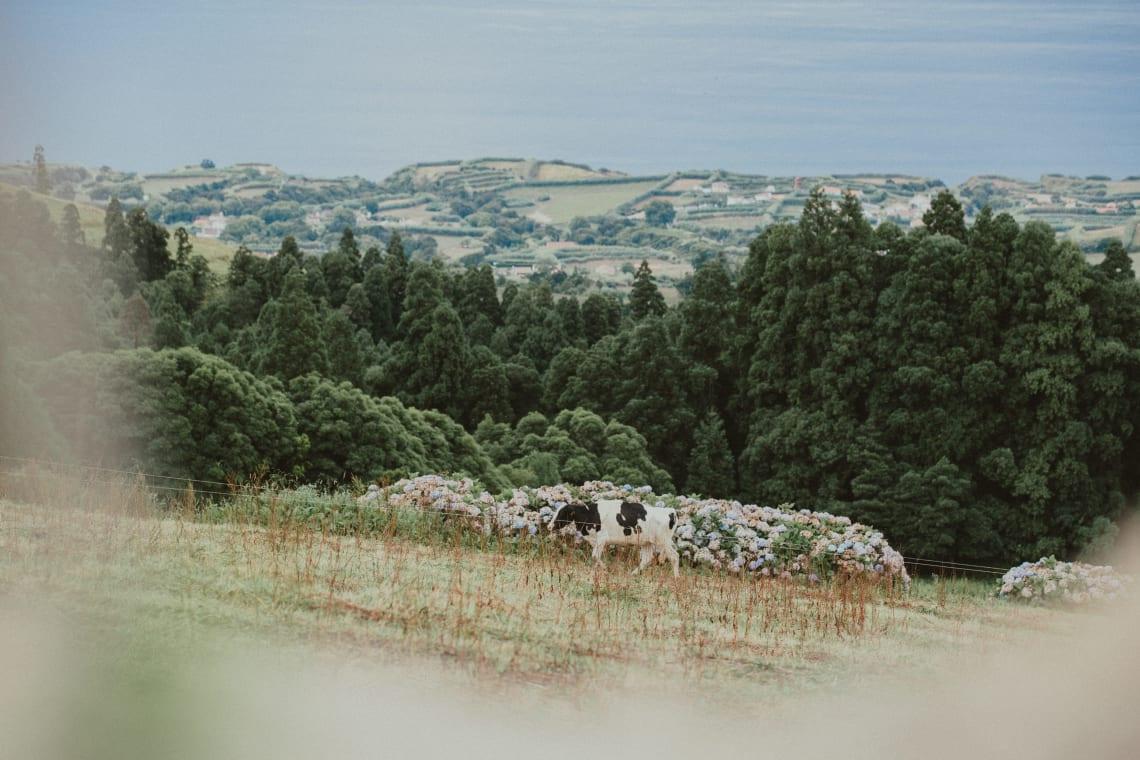 Farm volunteer opportunity in Portugal