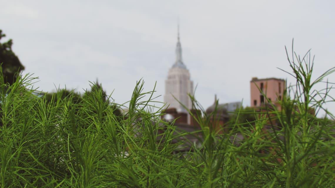 Guía para visitar Nueva York por primera vez: qué ver y recomendaciones - Worldpakcers - the high line en nueva york