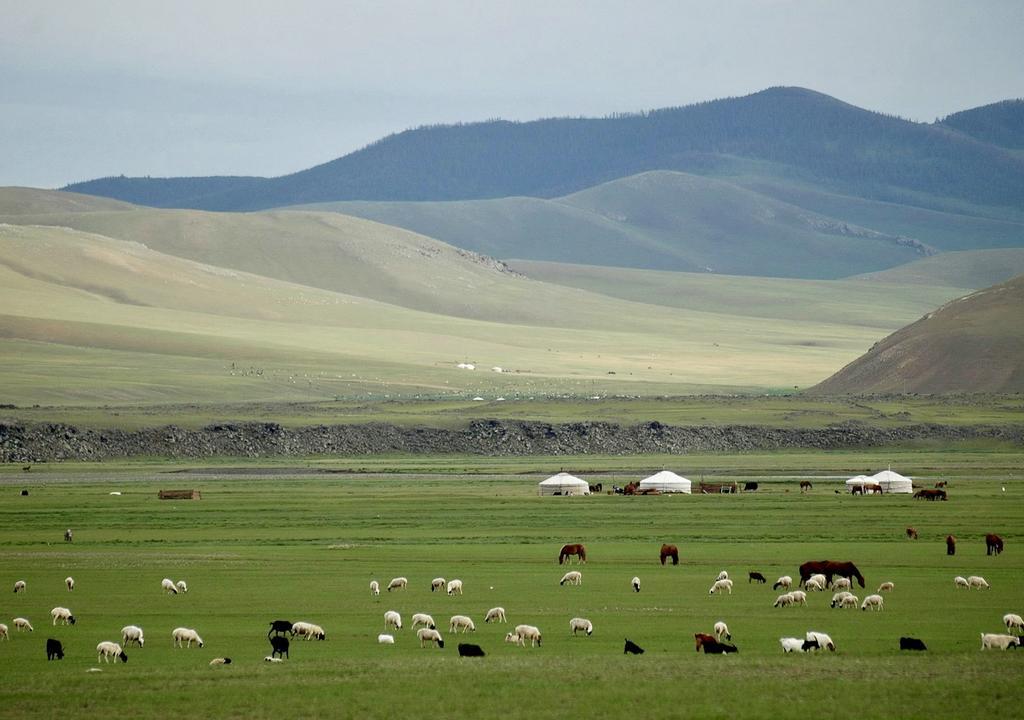 Volunteer with animals in Mongolia