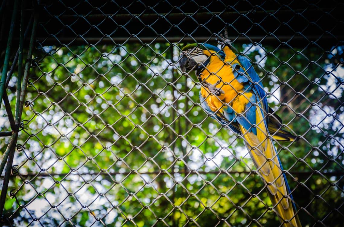 Viveiro de aves também se encaixam em situação de maus tratos contra animais