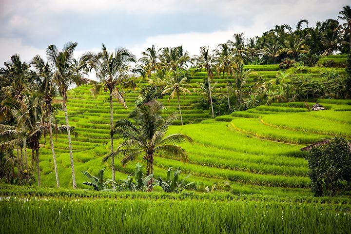 Ventajas y desventajas de un año sabático - Worldpackers - campos de arroz en bali
